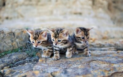Water play for Bengals